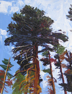 "BIG PINE 2011 12"" x 16"" acrylic on panel $320"